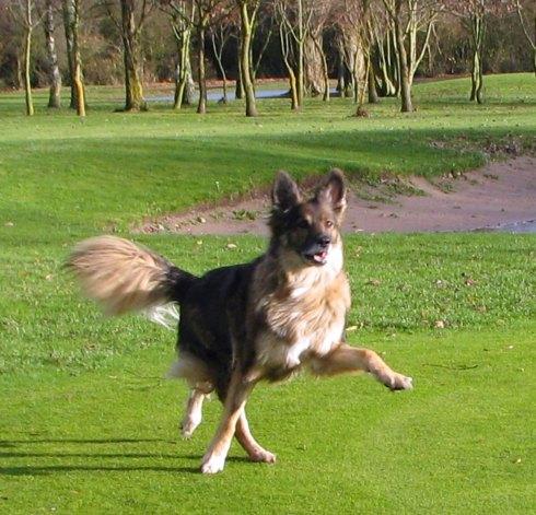 #LISSEN - Dancing dog.